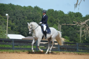 Disco a Lusitano stallion